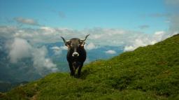 Vacas y prados